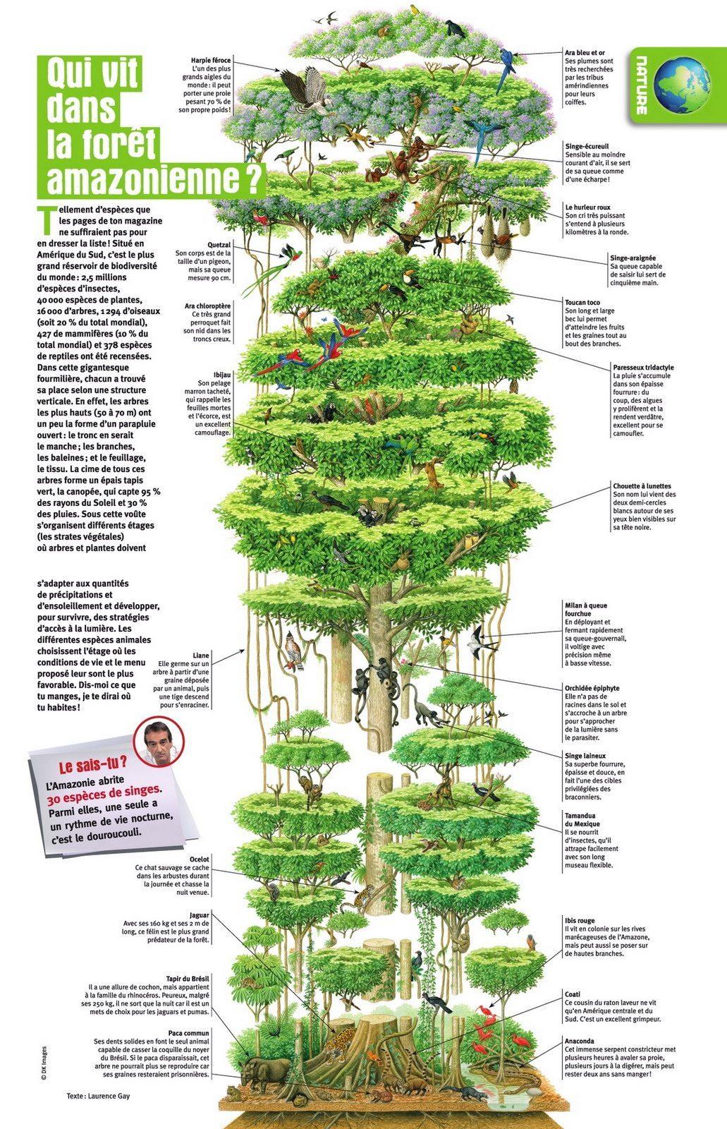 infographie amazonie