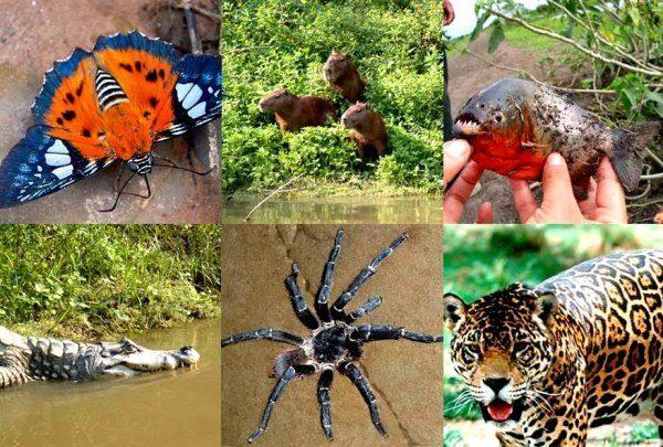voyager en amazonie